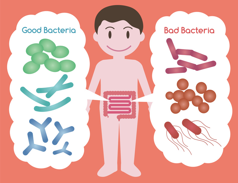 Good Bacteria and Bad Bacteria, enteric bacteria, Intestinal flora, Gut flora, probiotics, image illustration